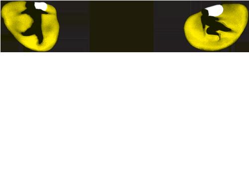 cats-logo-v21