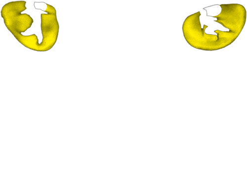 Memories From Cats The Musical Read It Sing It Enjoy Blog Of Intellectual Capital